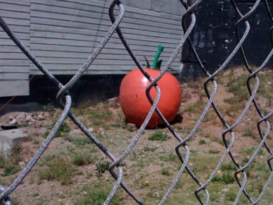 tomatonow.jpg