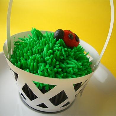 ladybug_lede.jpg
