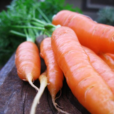 gg_carrots.jpg