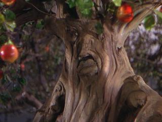 wizard-of-oz-apple-tree.jpg