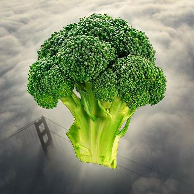 veg_fog.jpg