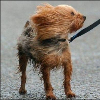 windy.jpg