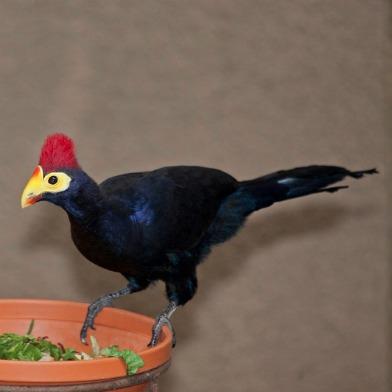 sfzoo.bird.8.26.jpg