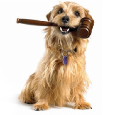 dog-holding-gavel.jpg