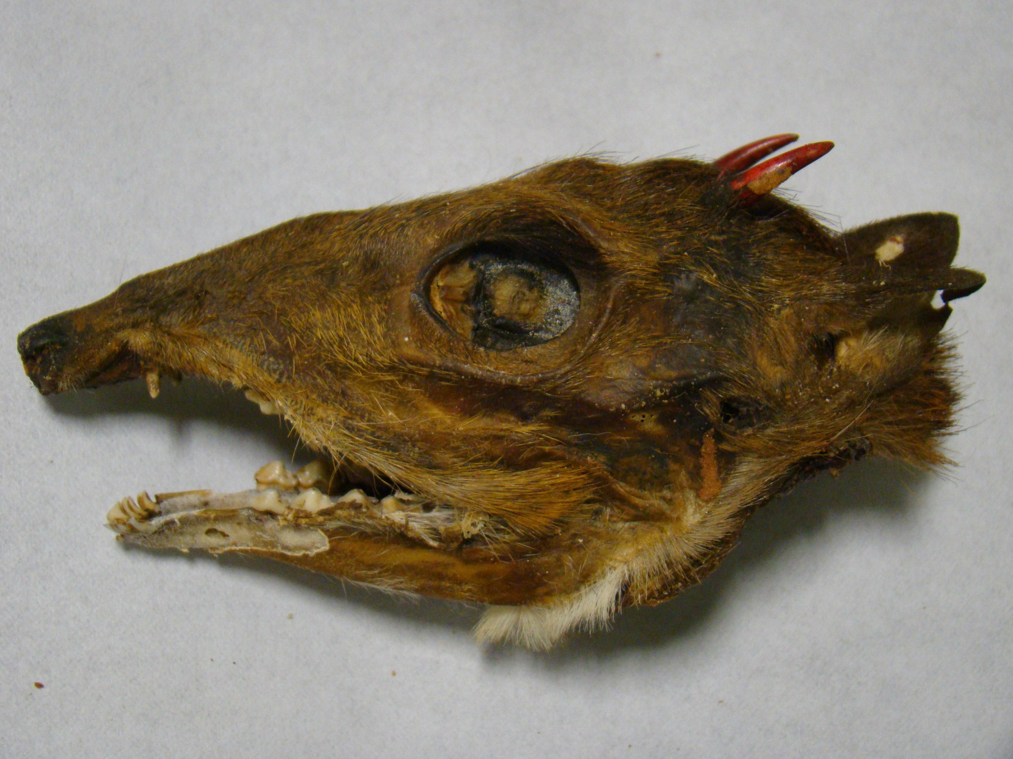 Skull01.17.12.jpg