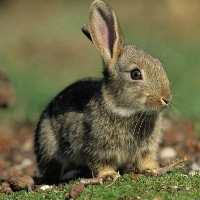 Easter Sunday Events: Egg Hunts, Hunky Jesus, Bring Your Own Big Wheel