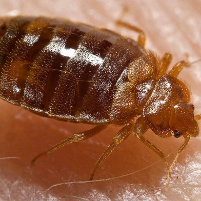 Good For Goodwill: Second Warehouse Inspection Yields No Sign Of Bedbugs