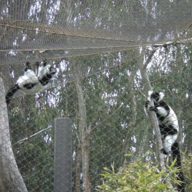 sf.zoo.lemurs.jpg