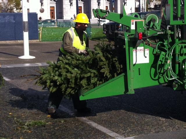 Treecycling12.26.12.jpg