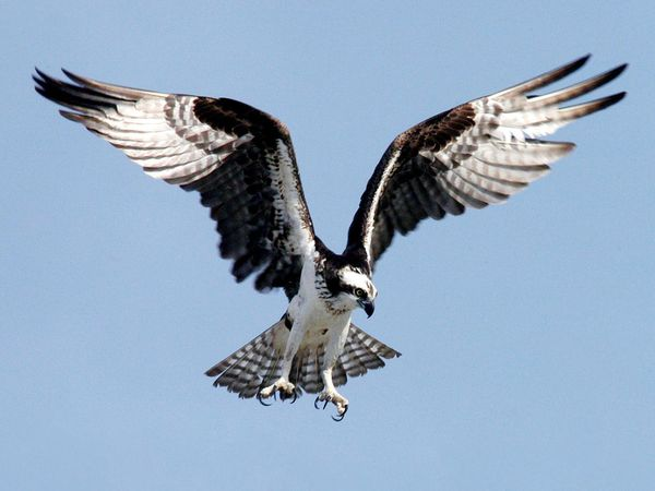 Feds Investigating SF Port's Destruction Of Raptor Nest