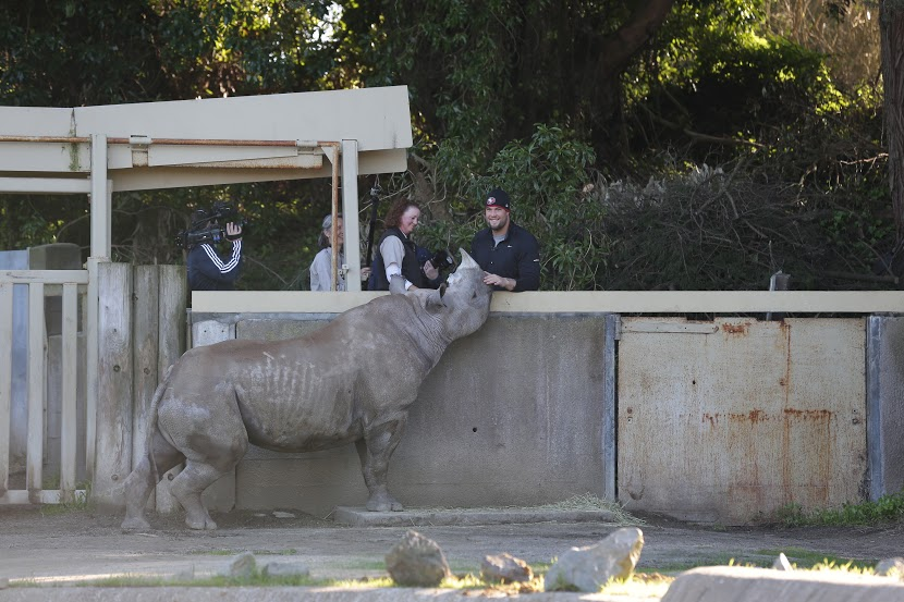 SF Zoo Names Black Rhino After 49ers Lineman