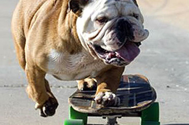 Parking Lot Beneath Central Freeway Begins Transformation Into Skate And Off-Leash Dog Park