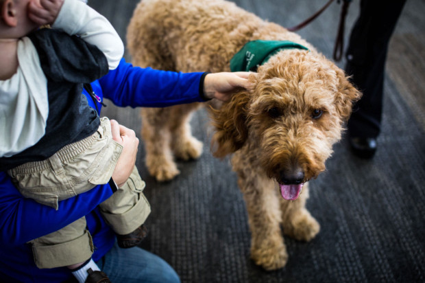Dogs Roaming SFO To Help Stressed Travelers Relax