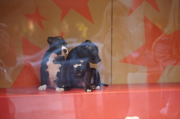 That Macy's Window Ploy Works: 339 Animals Found Homes This Holiday Season