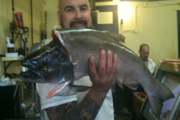 Memorial Service Friday For Beloved Local Butcher Josh Epple