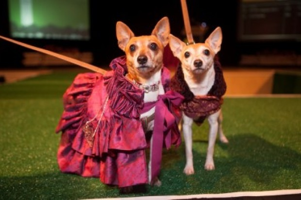 Haute Dog 3 is Happening Friday and It's Going to Be Adorable