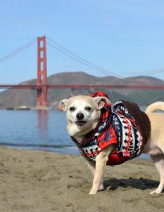 Tuesday, SF's Mayor Is A Dog