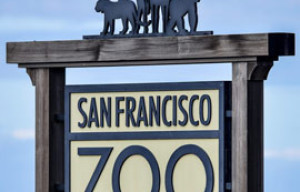 Pike the Polar Bear Dies at SF Zoo